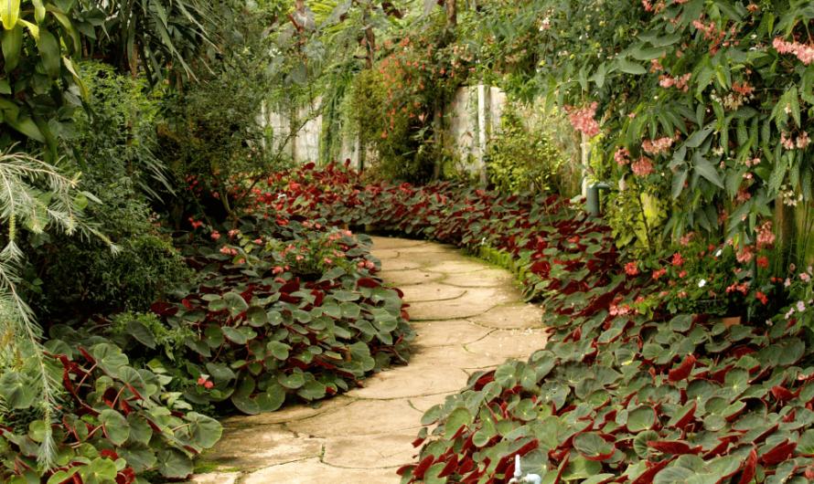 Quelles fleurs intégrer à son jardin pour le rendre original ?