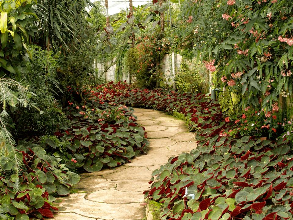 jardin de fleurs originales